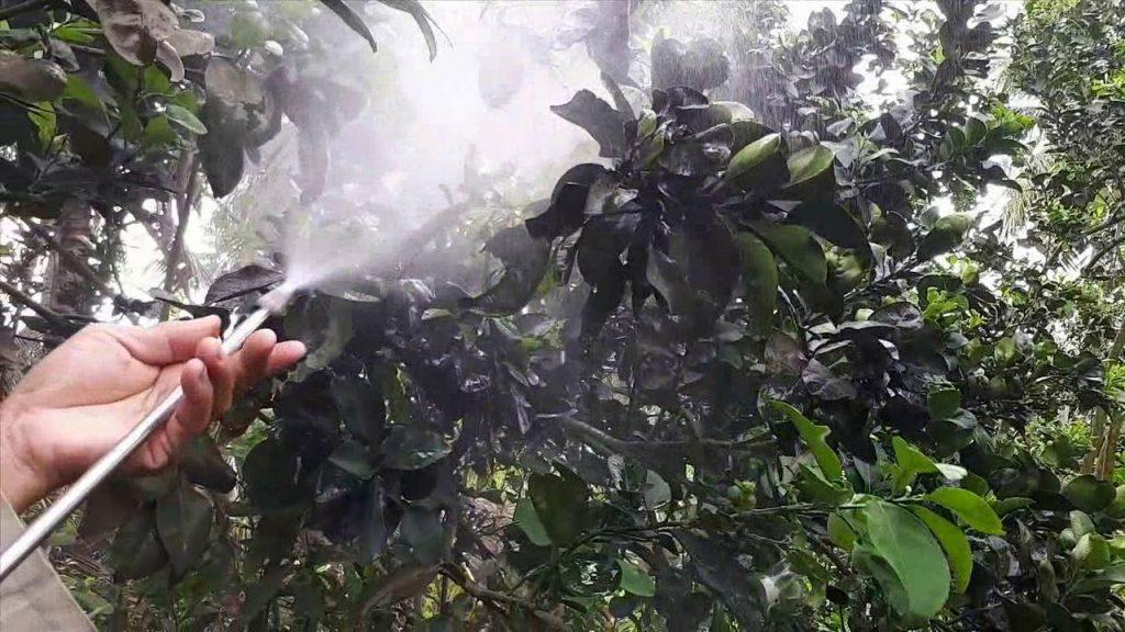 phòng chống sâu bệnh cho cây